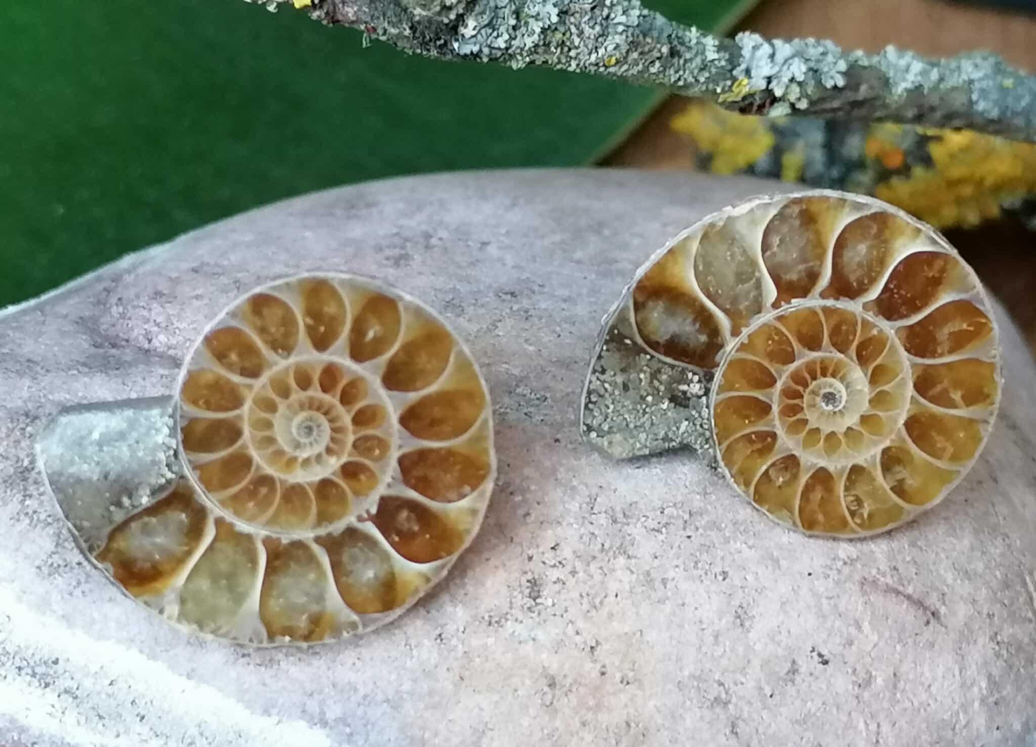Ohrstecker Ammoniten Paar Silber 925 Unikat Fossil Cleoniceras Madagaskar