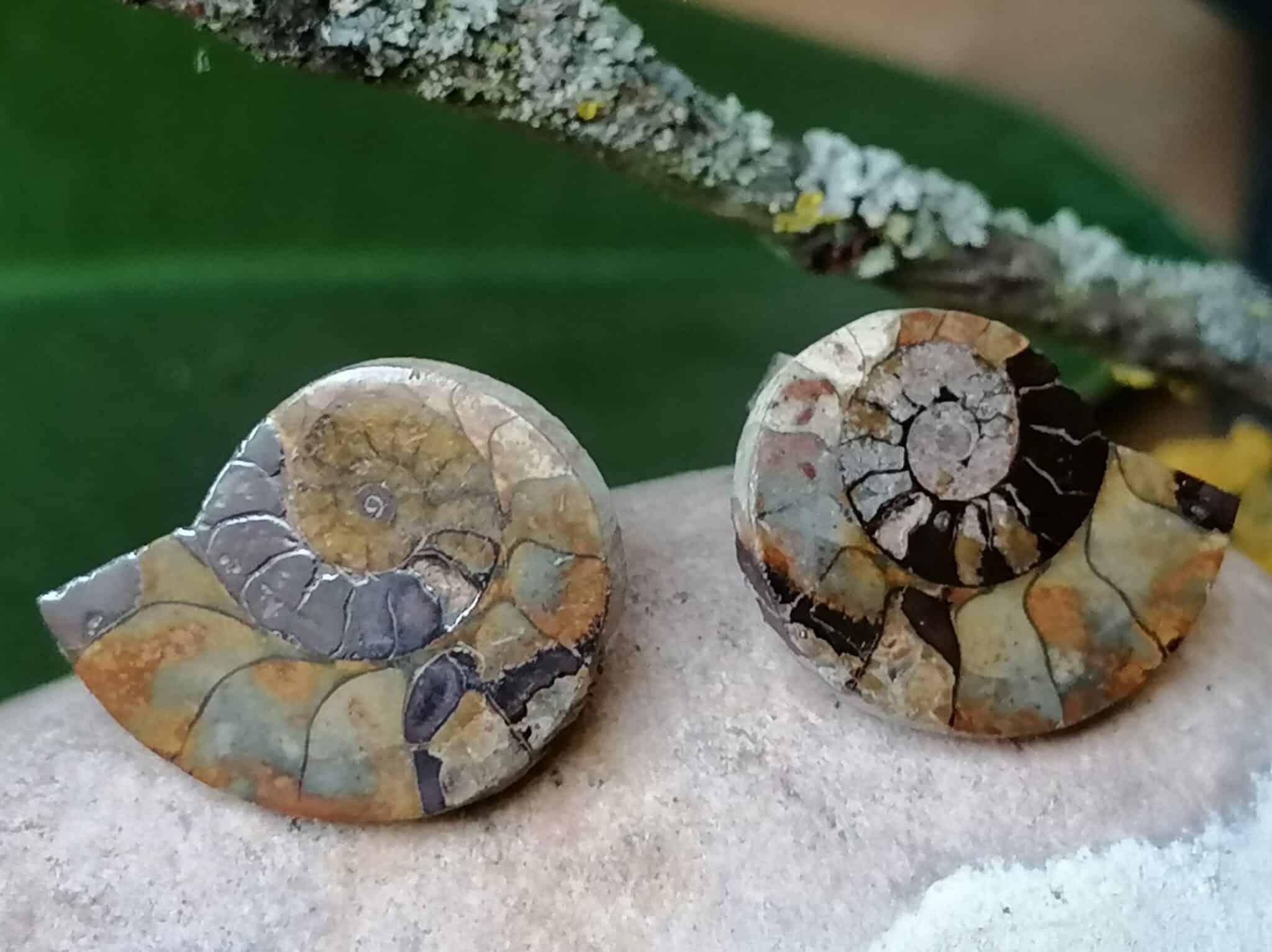 Ohrstecker Ammoniten Paar Silber 925 Unikat Fossil Cleoniceras Marokko