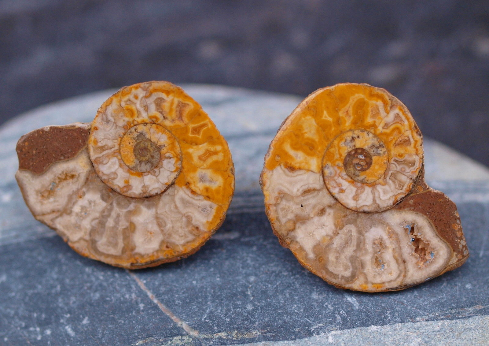 Ohrstecker Ammoniten Paar Silber 925 Unikat Fossil